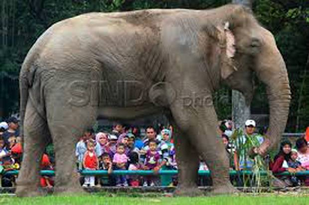 Terdampak Covid-19, Kebun Binatang Dapat Bantuan Operasional