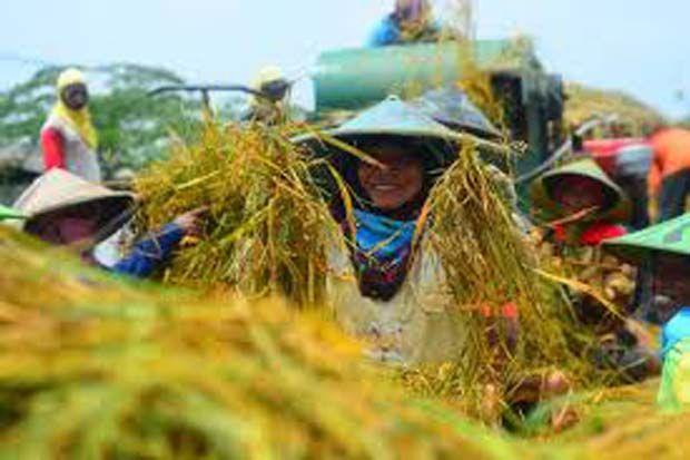 Soroti Penurunan Sektor Pertanian, Legislator Ini Kritik Kinerja Mentan