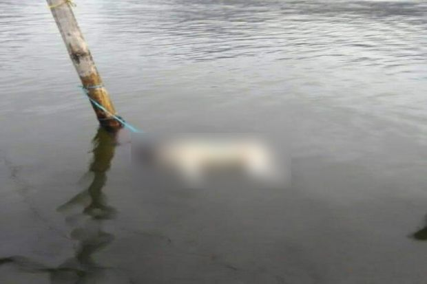 Mayat Bayi Ditemukan Mengapung di Sungai Batang Merao Kerinci Jambi