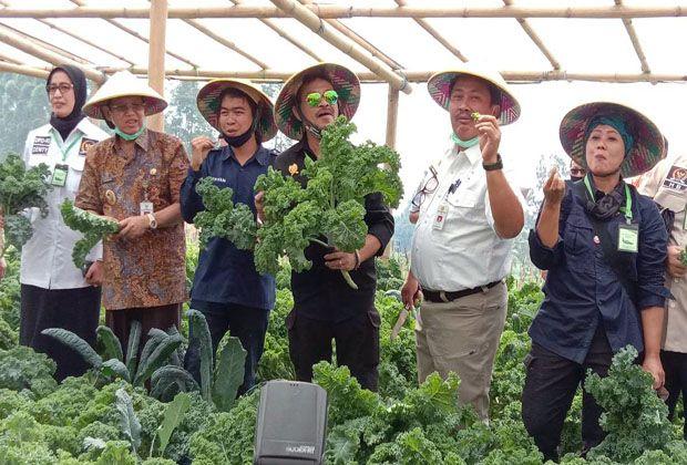 Mentan Yasin Limpo Dorong Pengembangan Sayuran Organik dari Semarang