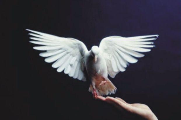 Tiga Nasihat Berharga dari Burung yang Tertangkap