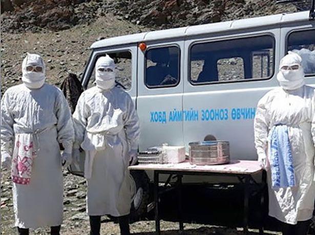 China Kembali Lahirkan Virus Baru, Pes Hantui Penduduk Mongolia