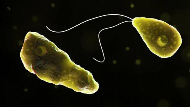 Amoeba yang Menggeregoti Otak Manusia Ditemukan di Florida