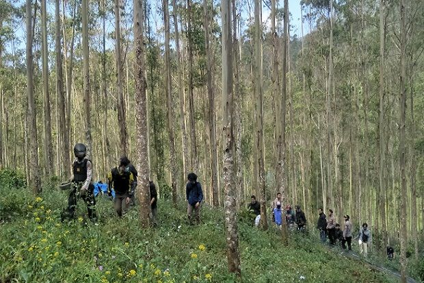 Polres Cimahi Ungkap 1 Hektare Ladang Ganja di Tengah Hutan