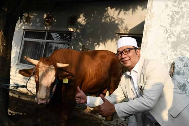 Ridwan Kamil Kurbankan Sapi Ade Rai di Sukawangi Bekasi