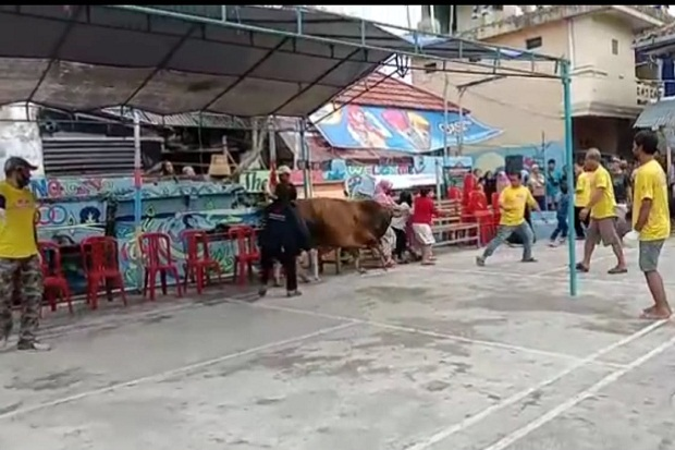 Seekor Sapi Kurban Ngamuk Seruduk Emak-emak di Tasikmalaya
