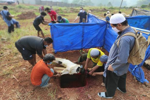 Pelindo I Salurkan 60 Hewan Kurban Langsung ke Masyarakat