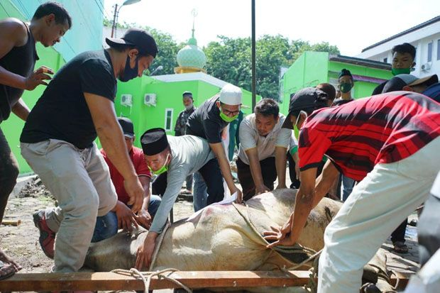 Daging Kurban Dikirim ke Nias Selatan hingga Kampung Mualaf