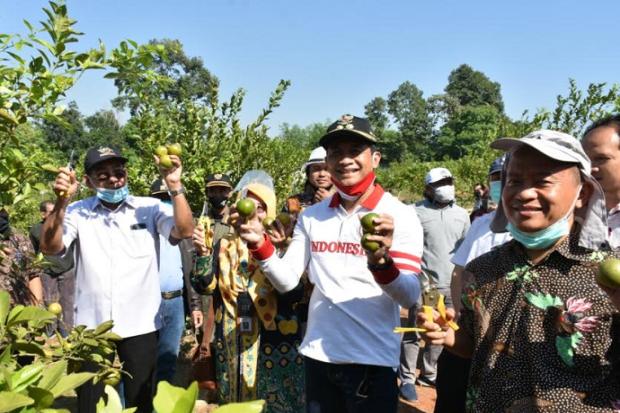 Batang Jadi Sentra Jeruk untuk Penuhi Konsumsi Dalam Negeri