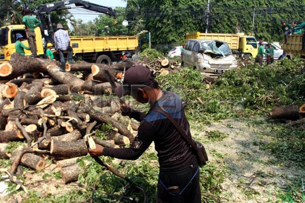 Periode Januari-Agustus, Pemkot Jakbar Akui Pangkas 4.868 Pohon