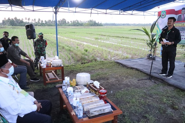 Menteri Pertanian Dorong Produksi Pertanian Halmahera Utara Lebih Maju
