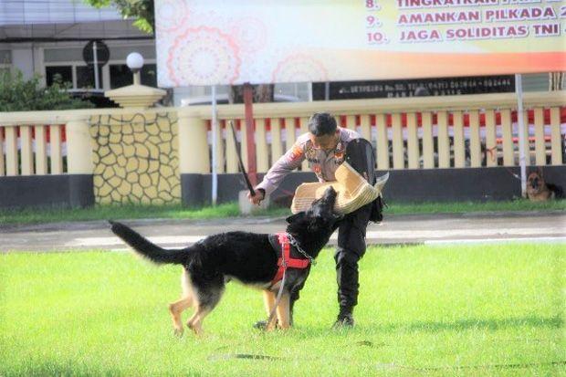 Kapolda Sulut Cek Kemampuan 9 Anjing Pelacak