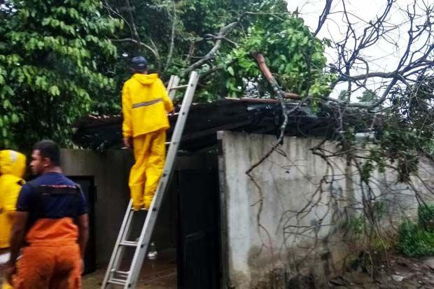 2 Rumah Warga di Kota Depok Tertimpa Pohon Tumbang