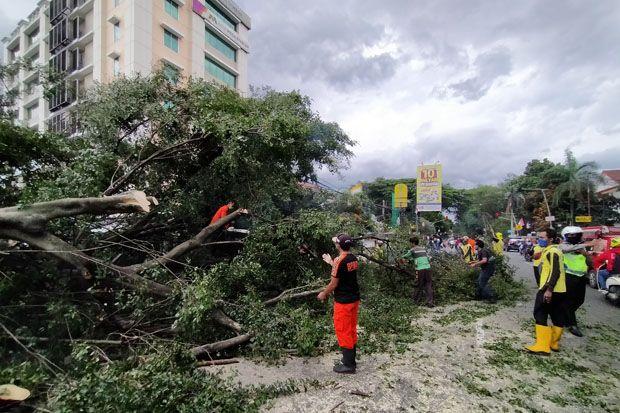 Pohon Beringin Tumbang Di Bogor Dua Wanita Pemotor Tertimpa