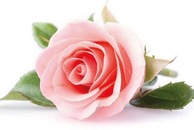 Seuntai Kalung Cantik Rasulullah untuk Umamah binti Abu Al Ash