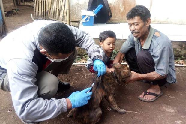 Teror Anjing Liar di Bandung Barat, 8 Warga Diserang dan Terluka
