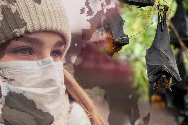 Di Tengah Pandemi Corona, Virus Nipah dengan Tingkat Kematian 75% Ancam Asia