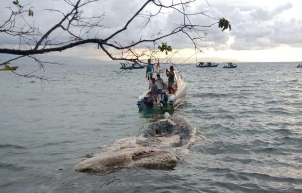Bangkai Paus Ditemukan di Perairan Pantai Liang Bunaken