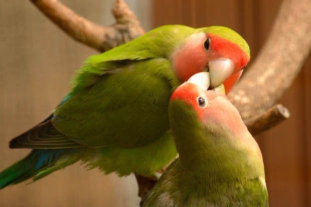 8 Hewan Romantis yang Hidup Semati dengan Pasangan