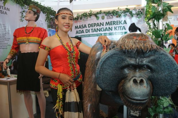 Tradisi Berburu Suku Dayak dan Keyakinan Orangutan Punya Hubungan dengan Nenek Moyang