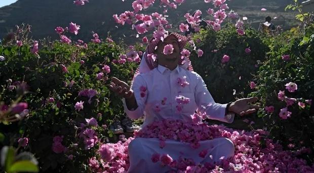Kota Mawar di Arab Saudi Merekah di Bulan Ramadhan