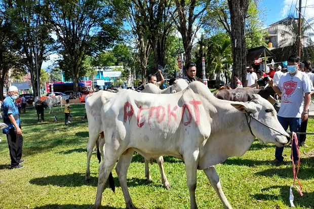 Pemkot Manado Sumbang 42 Ekor Sapi Kurban untuk Perayaan Idul Adha