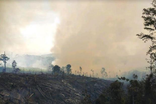 Sulit Dijangkau, 50 Hektare Hutan Lindung Bukit Suligi Riau Ludes Terbakar