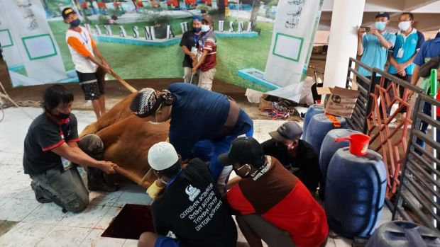 Sapi Presiden Jokowi Disembelih, Dibagikan ke Warga Sekitar Masjid Hingga Petugas Pemakaman