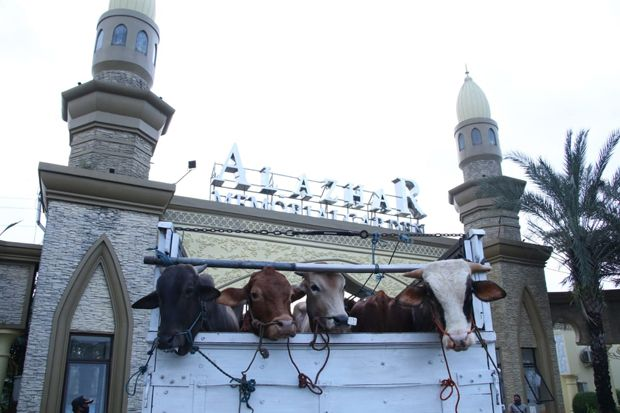 Al-Azhar Memorial Garden Sembelih 10 Sapi dan 144 Domba Kurban, Dibagikan ke Warga