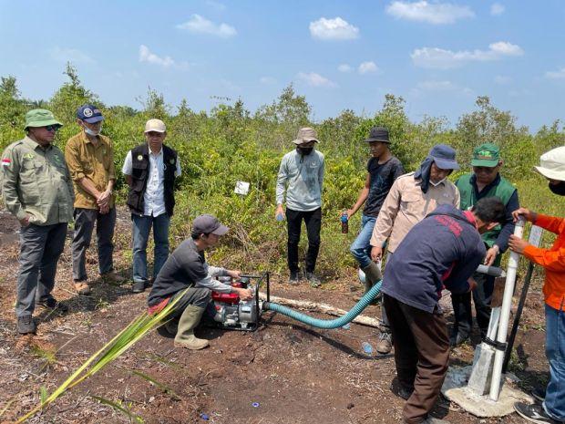 BRGM Targetkan Rehabilitasi 600.000 Ha Lahan Mangrove