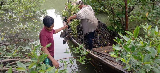 Rehabilitasi Mangrove Jadi Investasi Jangka Panjang Masyarakat