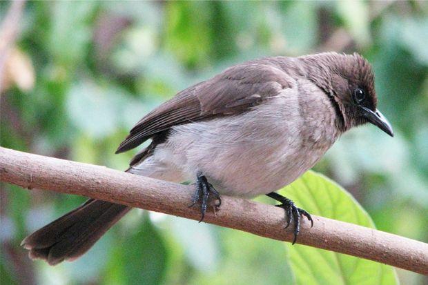 Nasihat Pertama Burung: Jangan Kecewa Jika Kehilangan Sesuatu
