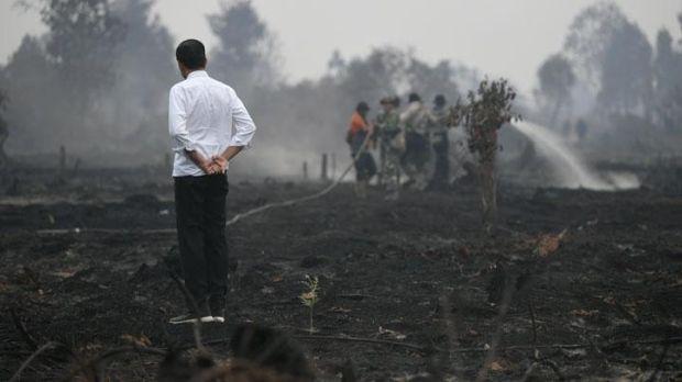 Soal Penanganan Perubahan Iklim, Jokowi Bisa Jadi Contoh Dunia