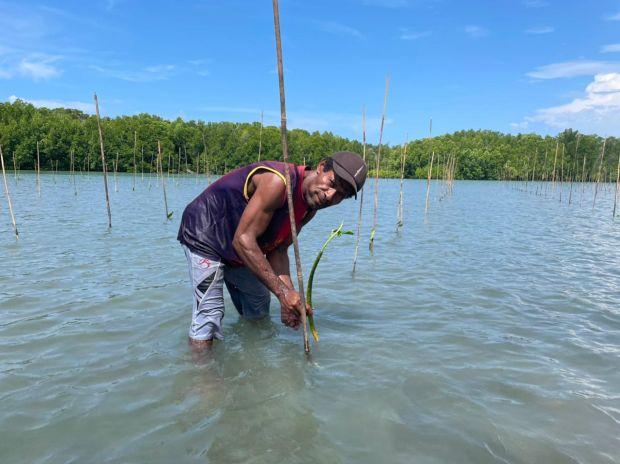 Penanaman Mangrove Jadi Jurus Jitu Pulihkan Ekonomi Nasional