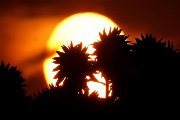 Matahari Terbit dari Barat Saat Tobat Tertolak, Tanda Pertama Kiamat