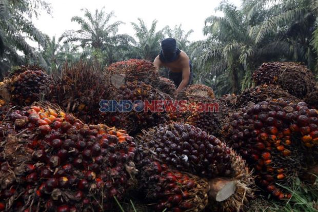 Jokowi Apresiasi Gerakan Vaksinasi 7 Juta Warga Perkebunan