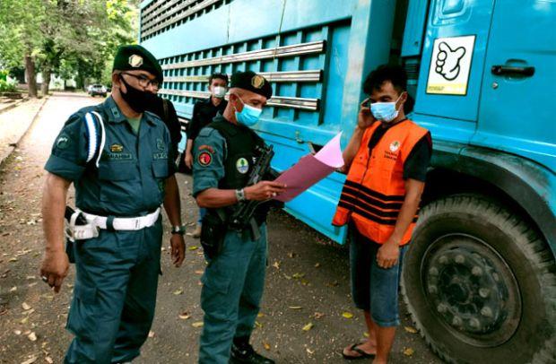 KLHK Ungkap Jaringan Perdagangan Kayu Ilegal Bermodus Dokumen Palsu di Luwu