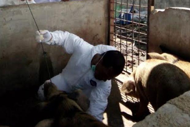 DPRD Sumut Tuding Gubernur Tak Punya Konsep Atasi Kematian Babi