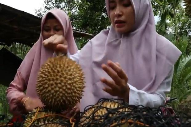 Desa Jambo Papeun Meukek Aceh Bau Harum Durian