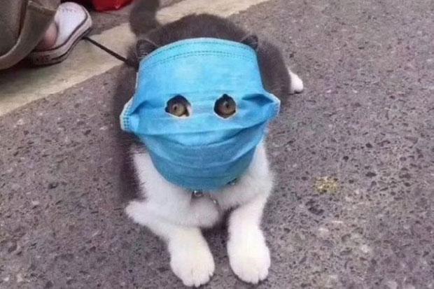 Virus Corona Menyerang Hewan, Kucing dan Anjing di China pun Pakai Masker