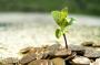 Gerakan Wakaf Uang Bisa Menjadi Energi Bangkitkan Ekonomi
