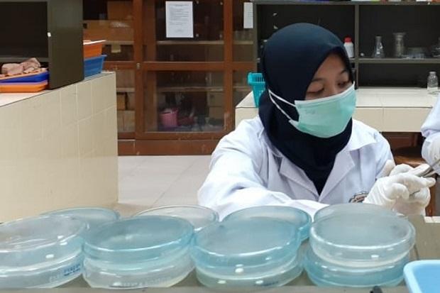 Mahasiswa UNY Teliti Daun Bandotan dan Tembelekan Jadi Antimikroba Herbal