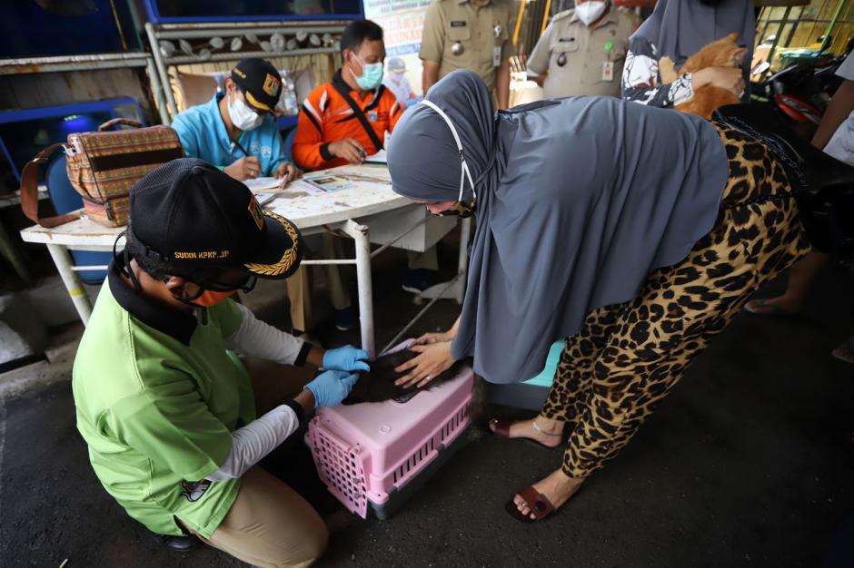 Program Vaksin Rabies Gratis di Jakarta Ramai Peminat-2