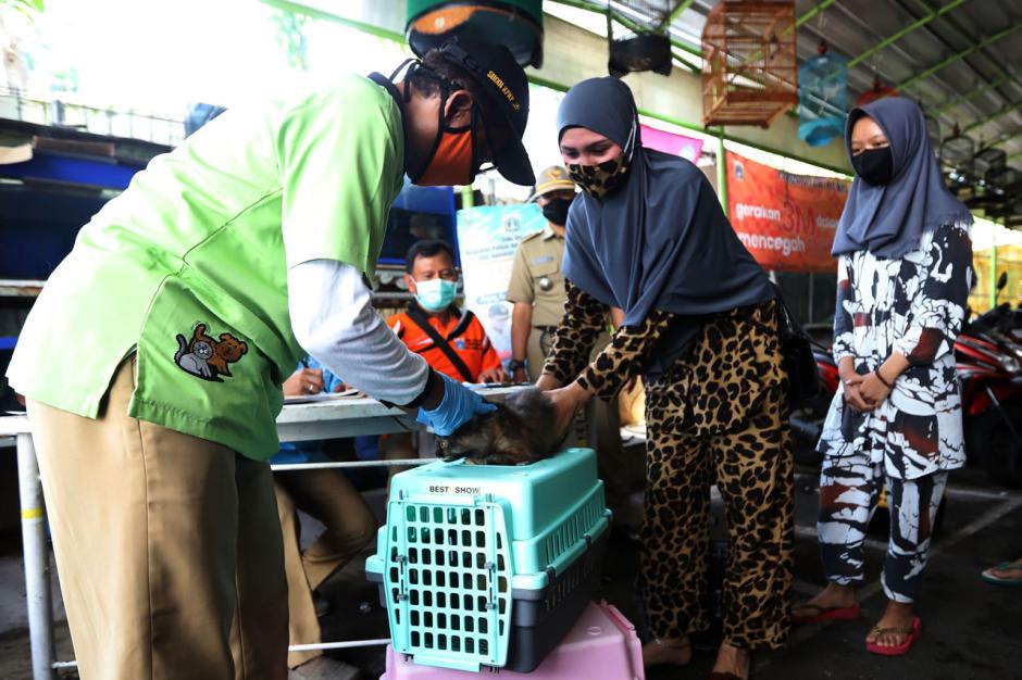 Program Vaksin Rabies Gratis di Jakarta Ramai Peminat-1