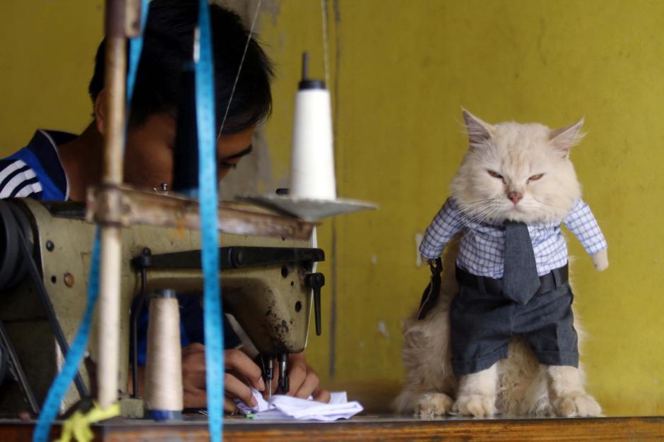 Bikin Gemes, Begini Potret Lucu Kucing saat Berbusana-1