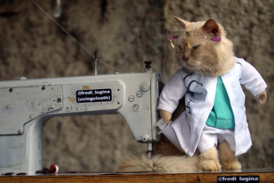 Bikin Gemes, Begini Potret Lucu Kucing saat Berbusana-0