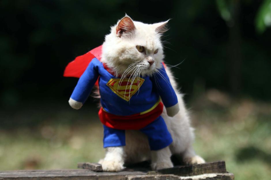 Bikin Gemes, Begini Potret Lucu Kucing saat Berbusana-7
