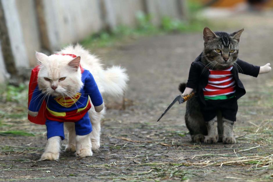 Bikin Gemes, Begini Potret Lucu Kucing saat Berbusana-5