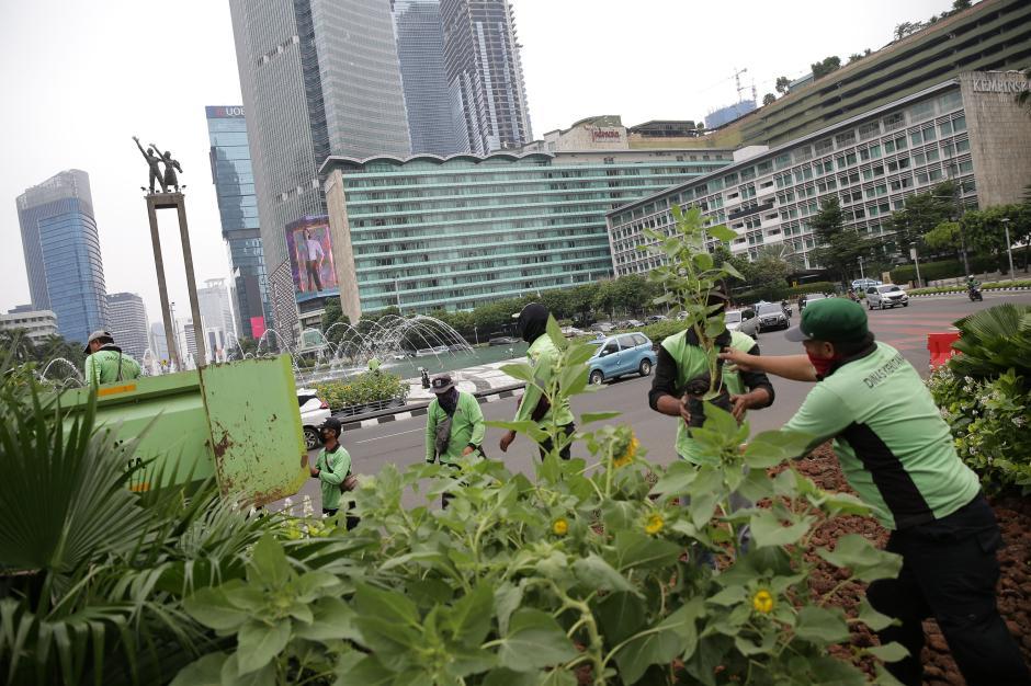 Sambut HUT DKI Jakarta ke-494, Hamparan Bunga Matahari Hiasi Bundaran HI-1
