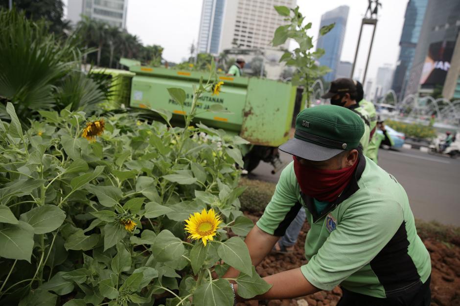 Sambut HUT DKI Jakarta ke-494, Hamparan Bunga Matahari Hiasi Bundaran HI-2